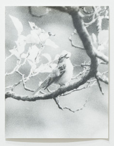 Singing Bird by Jochen Lempert